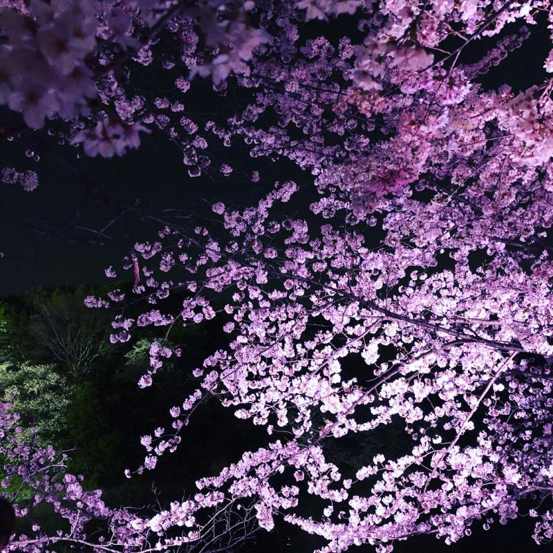 お花見シーズン♪